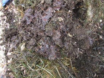 compost2_sm